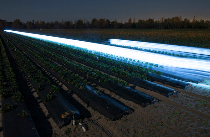 How Ultraviolet Light Can Help Save Strawberries